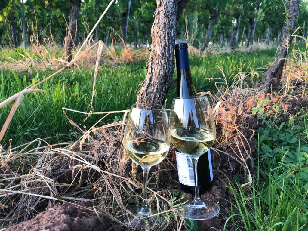 Weingüter im Remstal_Weinflasche mit Gläser an einer Rebe